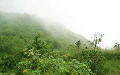 Pandikuzhi