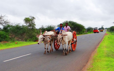 bullock cart ride kerala